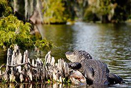 Tour por los pantanos y canales