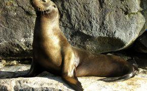 Galapagos Tradicional 5 D�as/4 Noches Hab Doble Clase Turista