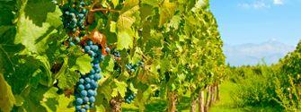 Rota do vinho - Mendoza