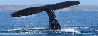 Naturaleza y aventura en Puerto Madryn