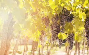 Visita a bodegas y f�brica de aceite de oliva