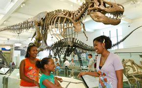 Museu Americano de Hist�ria Natural