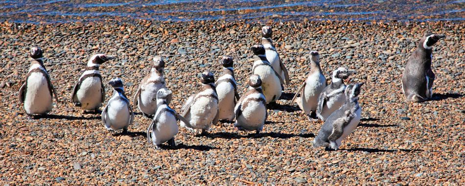 Puerto Madryn,Argentina