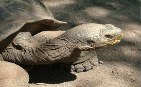 Clasico Galapagos 4 D�as/3 Noches Hab Doble Clase Turista