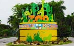 Visita interactiva al Zoo de Miami