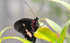 Jard�n de Mariposas e Insectario de Audubon